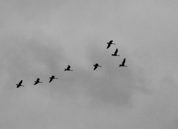 Flying, iPhone Photo Roberto Portolese
